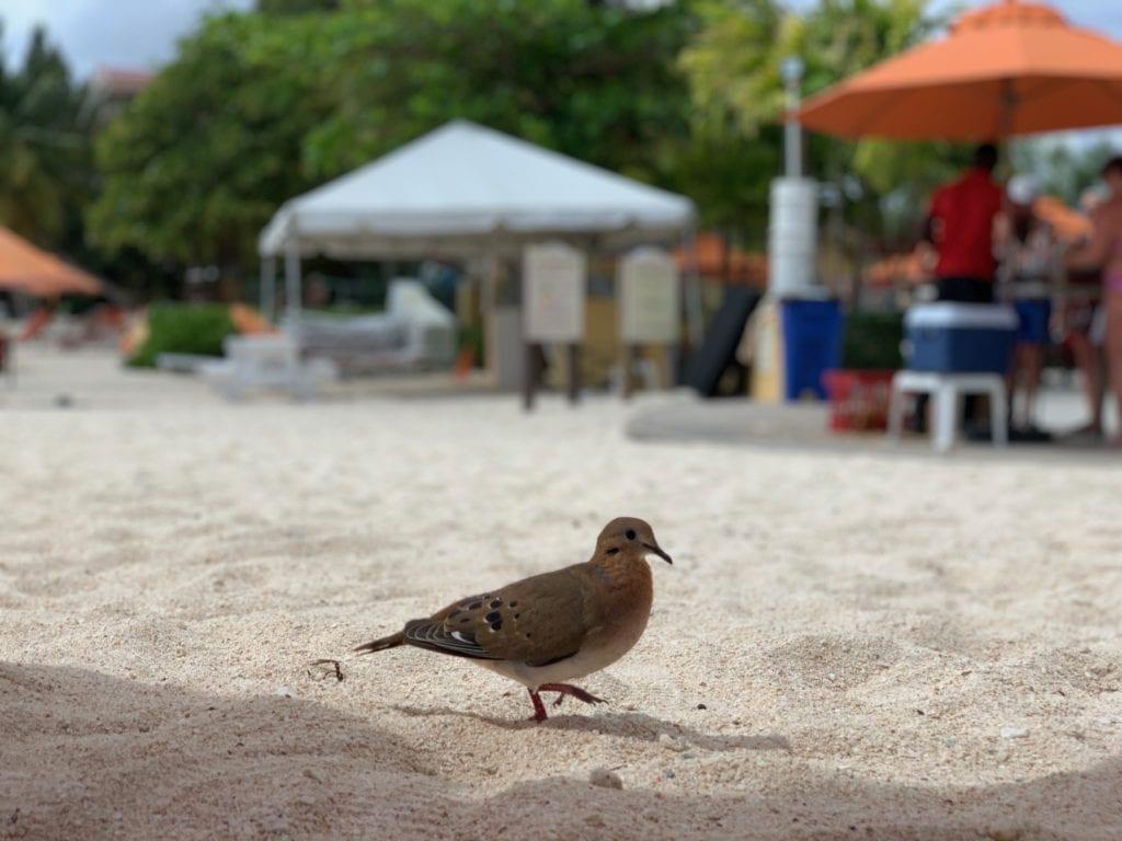 E3 Visa Barbados Ocean Two Hotel Resort Bird